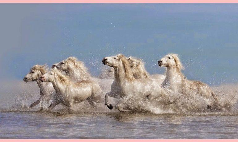 Como um tropel de cavalos desembestados