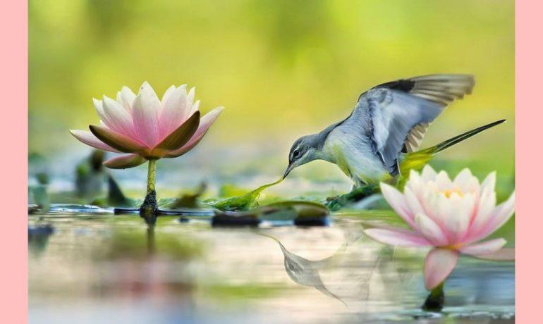 O budismo não é a religião do acreditar. É a religião de despertar.