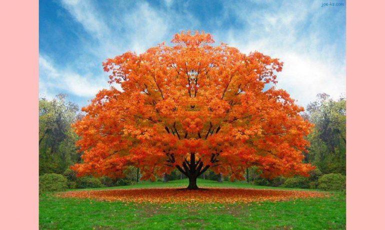 O fruto da árvore da ciência do bem e do mal