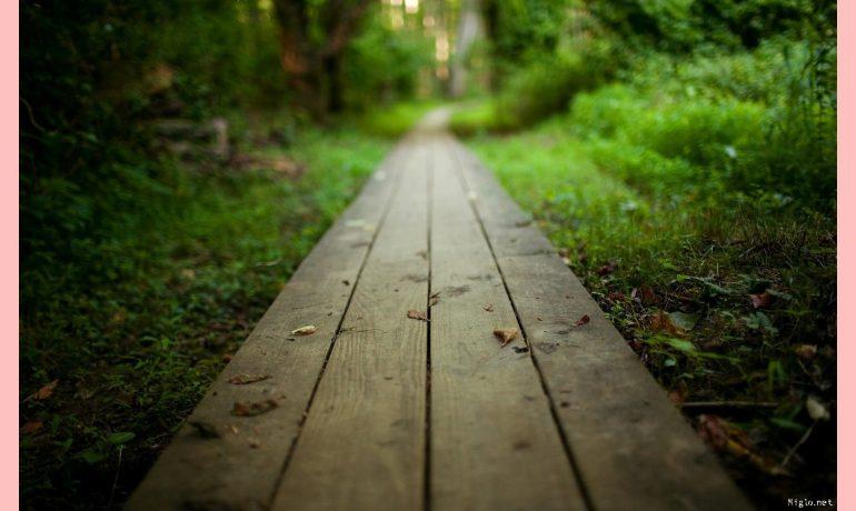 Leigo, Noviço, Zagen - Uma longa caminhada