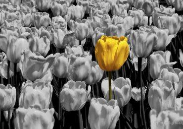 Carma e Individualidade | Monge Genshô