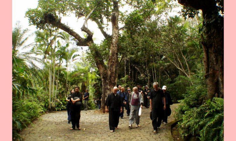Caminhos na floresta