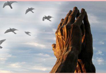 Entrevista: O Zen e as Ações Sociais