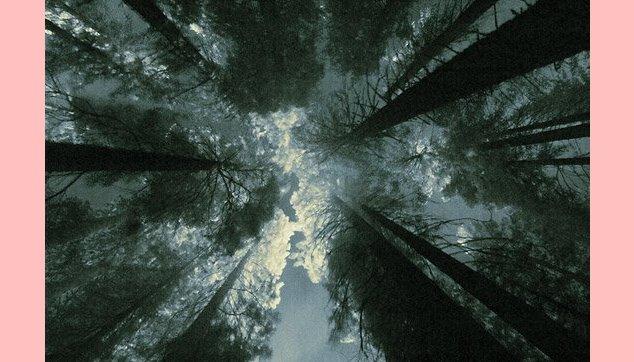 Árvores juntas crescem retas