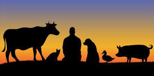 Os animais e o Carma | Monge Genshô