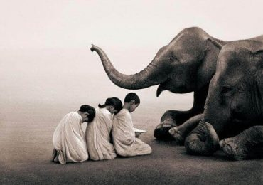 Humildade | Monge Genshô